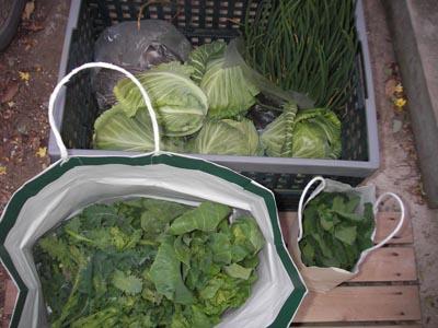 土産の野菜