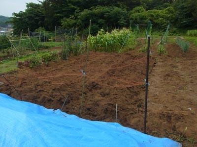 緑大豆種まき