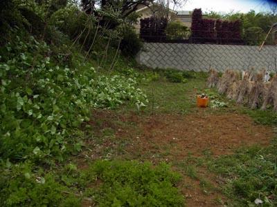 ミニ山菜園