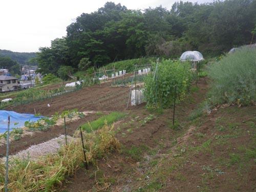 雨待つ菜園